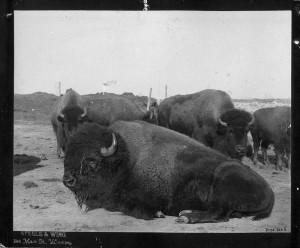 Buffalo from Esplanade
