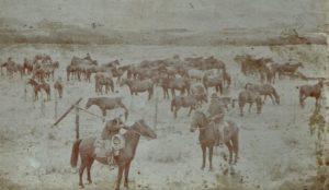 John Grant horses / Photo courtesy Graham Parsonage Collection